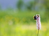 Werken aan biodiversiteitsherstel op Nijmeegse campus afbeelding nieuwsbericht