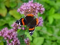 Radboud Universiteit start onderzoek voor meer biodiversiteit op campus afbeelding nieuwsbericht