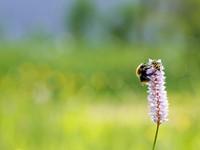 Hoe maak je biodiversiteit meetbaar? afbeelding nieuwsbericht