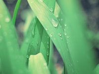 Arboweetjes: Werken in de regen afbeelding nieuwsbericht