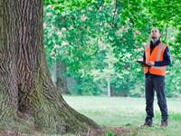 Uitnodiging: Infomiddag ETM (European Tree Manager) op 12 december  afbeelding nieuwsbericht