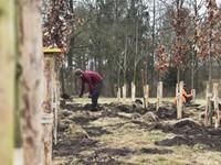 Praktijkproef aanplanten en snoeien van bomen afbeelding nieuwsbericht
