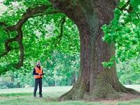 Nieuw: European Tree Manager  afbeelding nieuwsbericht