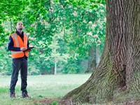 De uitdaging van een European Tree Mananger afbeelding nieuwsbericht