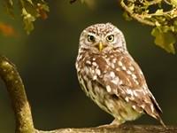 De Gedragscode soortbescherming gemeenten; veel gestelde en beantwoorde vragen afbeelding nieuwsbericht