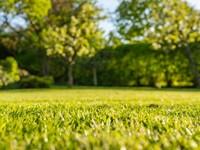 Aan de slag met Natuur in de omgevingswet. afbeelding nieuwsbericht