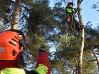 European Tree Worker-opleiding anno nu! afbeelding nieuwsbericht