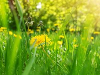 Weg met mooi, leve de natuurlijke processen afbeelding nieuwsbericht