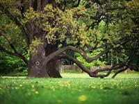 European Tree Worker examen uitgesteld naar oktober afbeelding nieuwsbericht