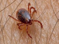 Arboweetjes: Biologische ziekteverwekkers toegelicht afbeelding nieuwsbericht