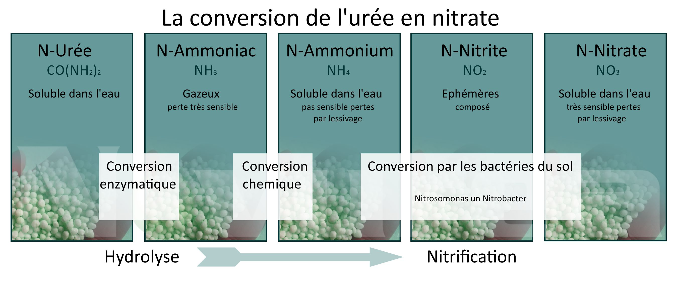 la conversion urée nitrate