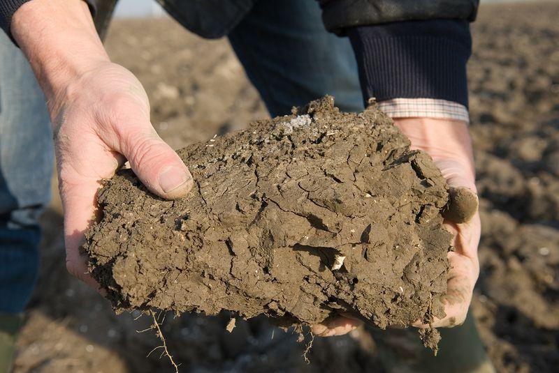 Calcium en bodemstructuur