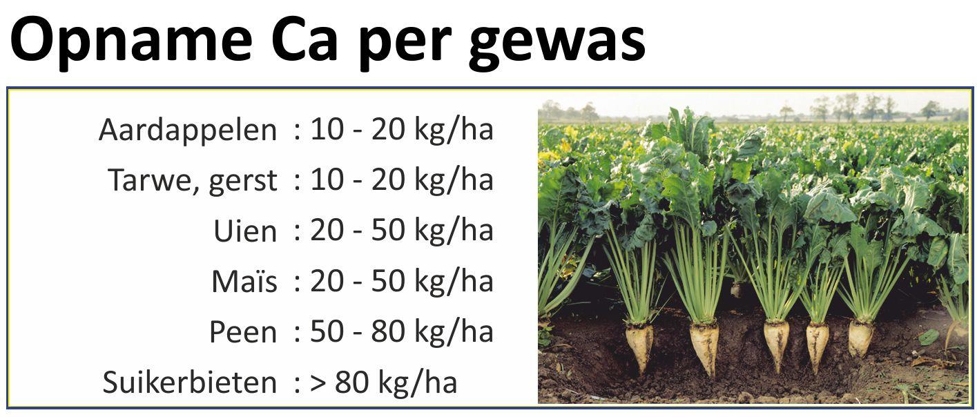 Calcium opname per gewas