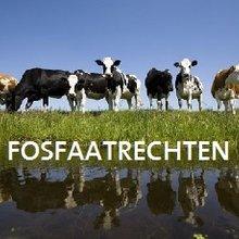 Fosfaatrechten, alle informatie in één oogopslag