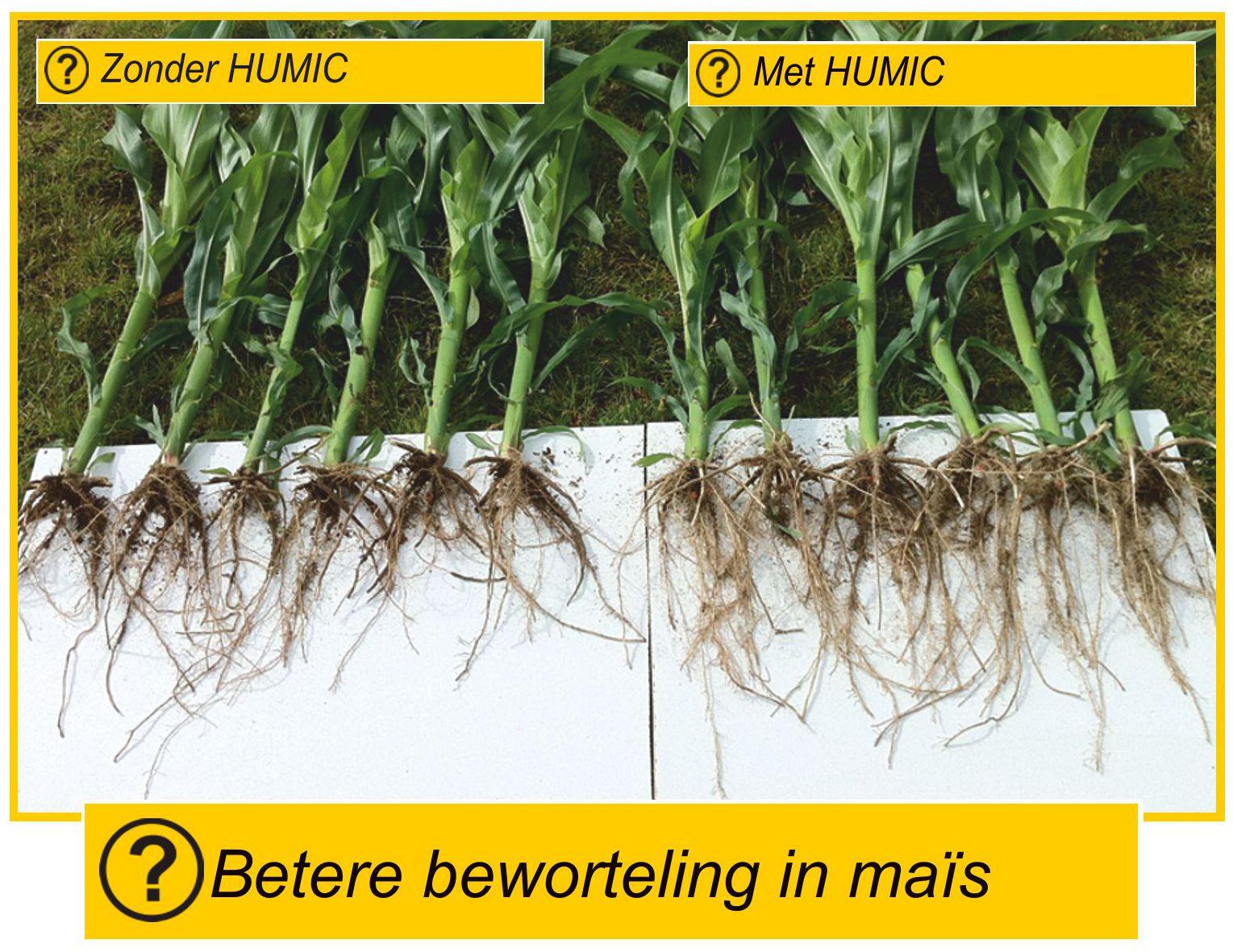 Wortelontwikkeling fosfaat mais Humuszuren Humic