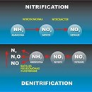 Nitrification inhibitors