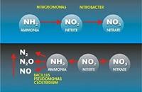 Nitrifikationshemmstoffe