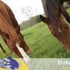 Smakelijk gras met Seferto-Horse meststoffen