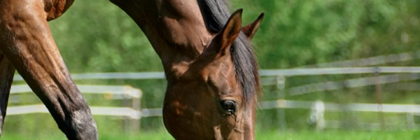 Seferto-horse